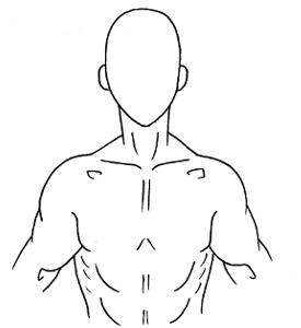 Human Torso Outline Images & Pictures - Becuo